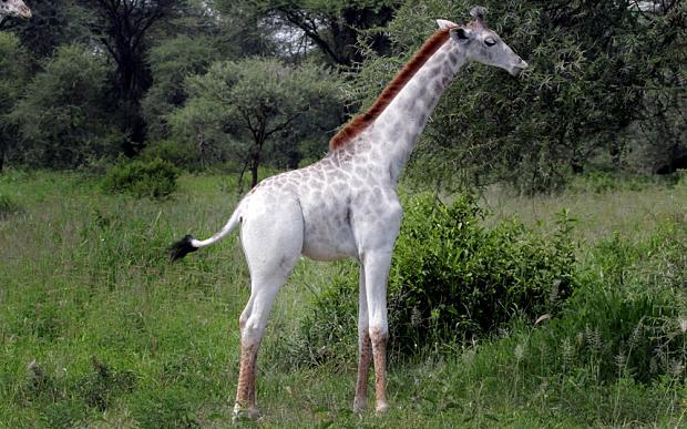 giraffe-m_3558774b